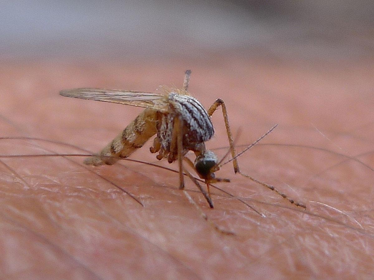 insekten spinnen w rmer umwelt im unterricht. Black Bedroom Furniture Sets. Home Design Ideas