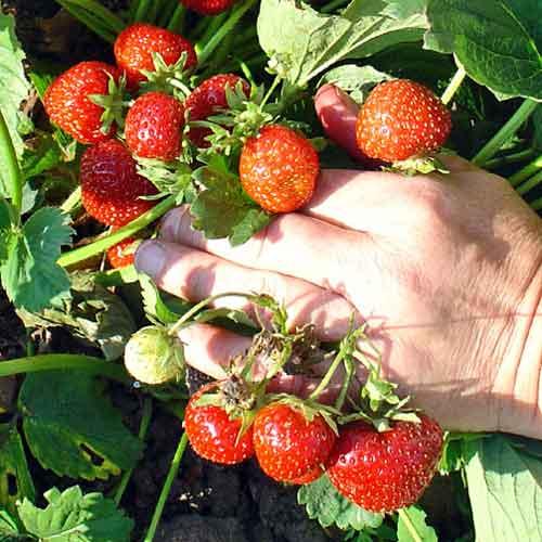 Moderne Konsummuster und saisonale Lebensmittel | Umwelt im ...