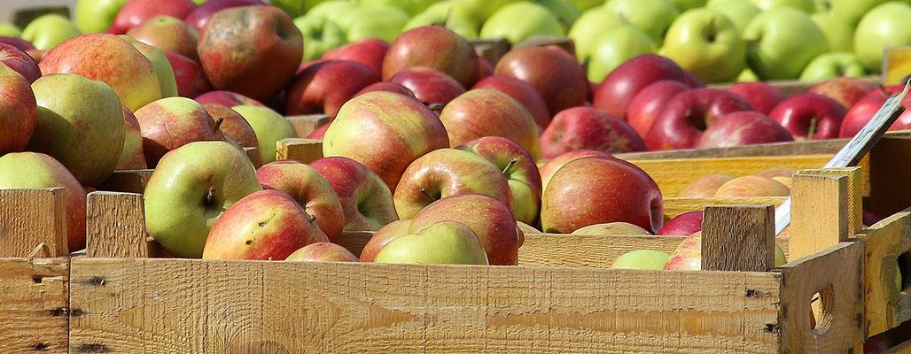 Apfel ist nicht gleich Apfel | Umwelt im Unterricht: Materialien und ...