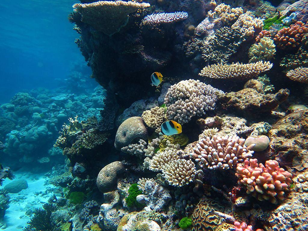 Tropische Korallenriffe