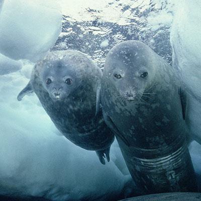 Was bedeutet der Klimawandel für die Tiere im Meer? | Umwelt im ...