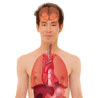 Der menschliche Körper und Umwelteinflüsse (SEK/GS) | Umwelt im ...